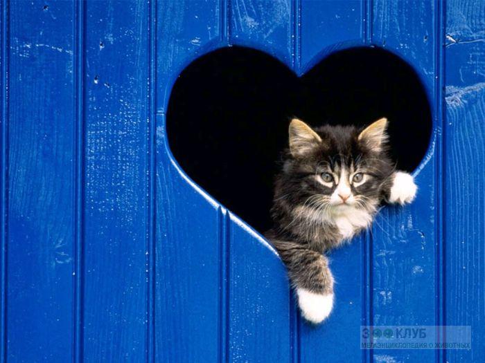 Котенок и сердечко, фото фотография картинка обои