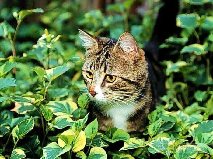 Кошка в траве фотообои, фото обои, фотография