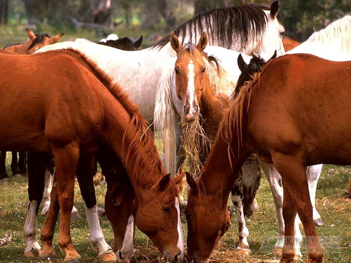 Лошади фотообои, фото обои, фотография картинка
