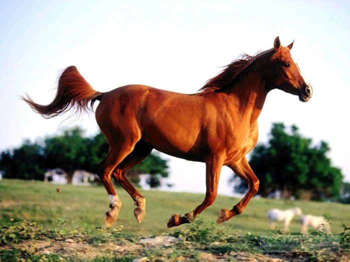 Лошадь, фотообои, фото обои, фотография, картинка