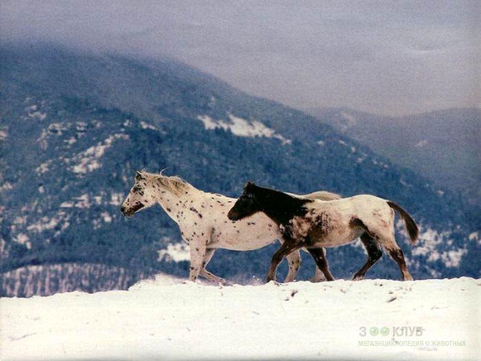 Лошади в горах, фотообои, фото обои, фотография картинка