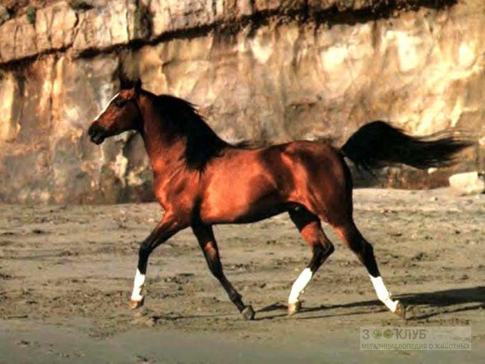 Лошадь, фотообои, фото обои, фотография картинка