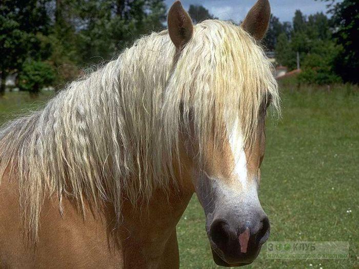 Лошадь с длинной гривой, фотообои, фото обои, фотография картинка