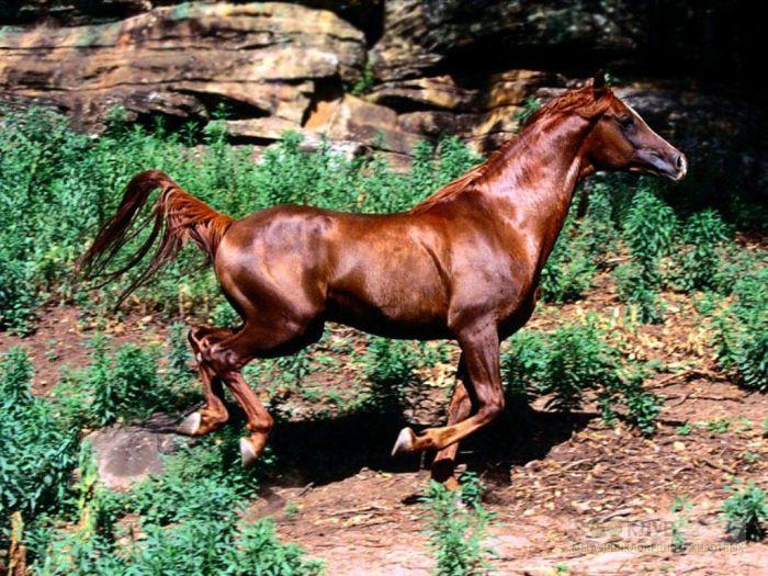 Бегущая лошадь, фотообои, фото обои, фотография картинка