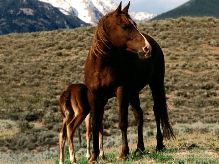 Лошадь с жеребенком фотообои, фото обои, фотография картинка