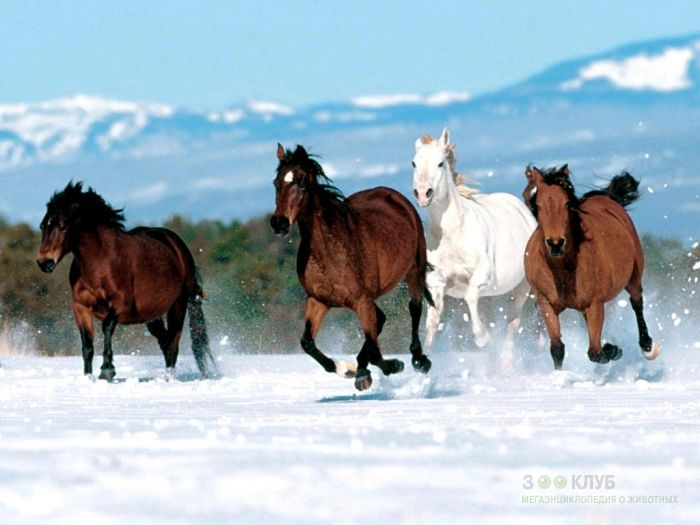 Бегущие кони фотообои, фото обои, фотография картинка