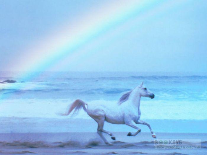 Лошадь и радуга, фотообои, фото обои, фотография картинка