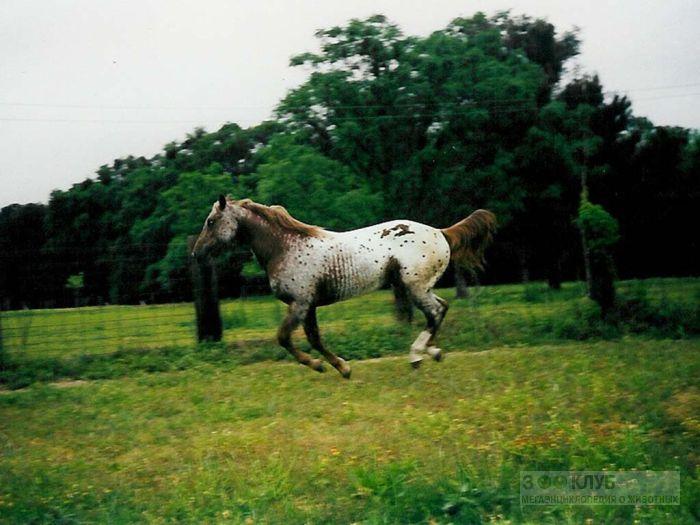 Лошадь бежит по лугу, фотообои, фото обои, фотография картинка