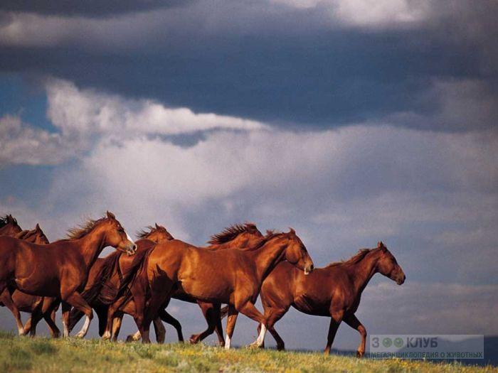 Бегущие лошади на фоне голубого неба, фотообои, фото обои, фотография картинка