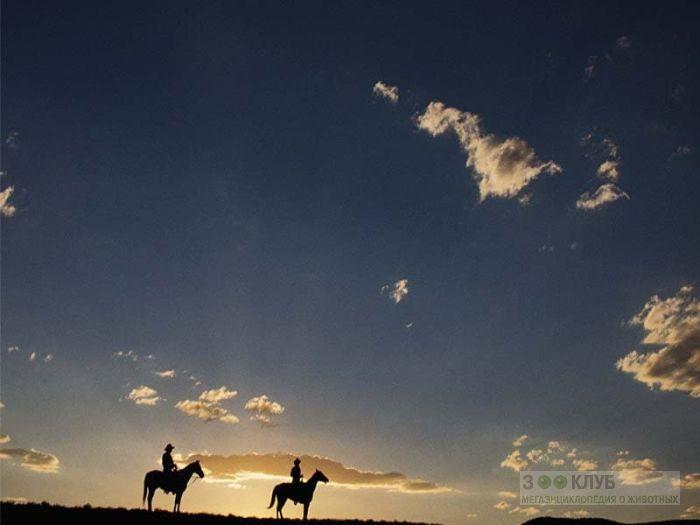 Всадники на лошадях фотообои, фото обои, фотография картинка