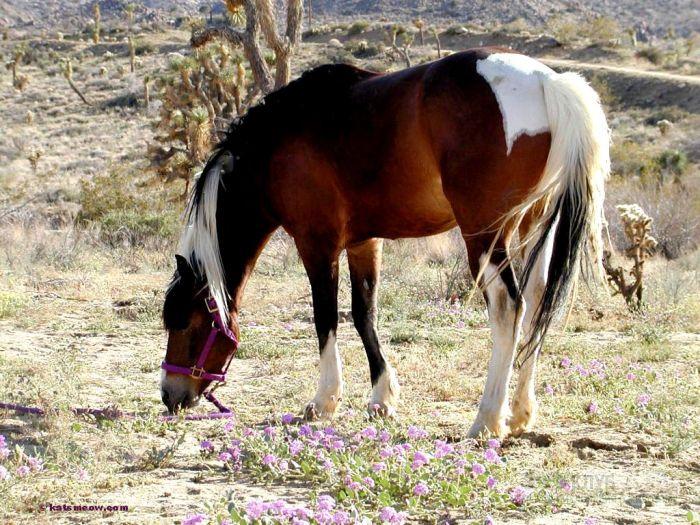 Пасущаяся лошадь, фотообои, фото обои, фотография картинка