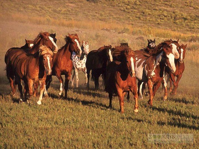 Табун лошадей фотообои, фото обои, фотография картинка