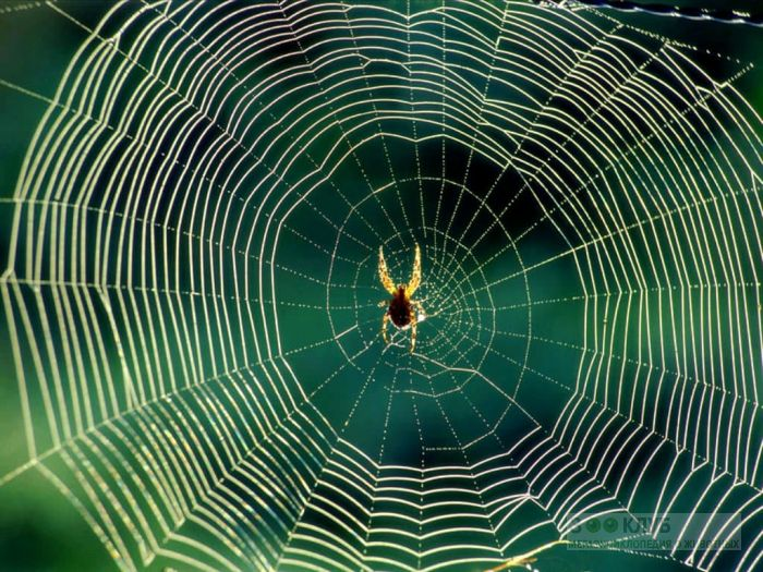 Паук в паутине фото обои картинка