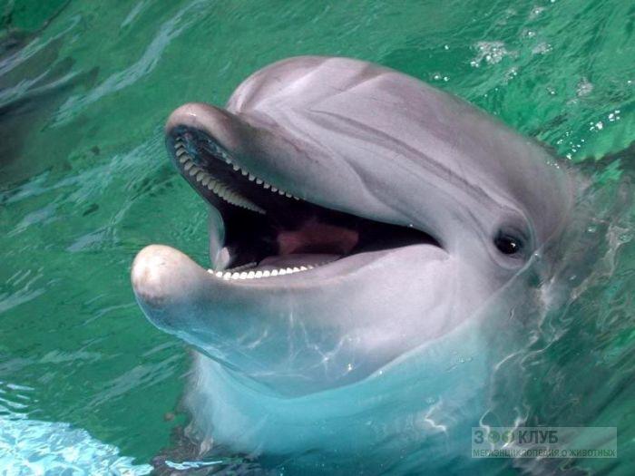 Дельфинья голова фото обои картинка