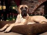 Самые упрямые породы собак в мире